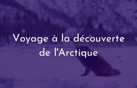 Voice over documentaire sur l'Arctique